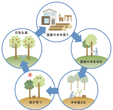 日本の木を使うことは、森を守ることにつながっています。