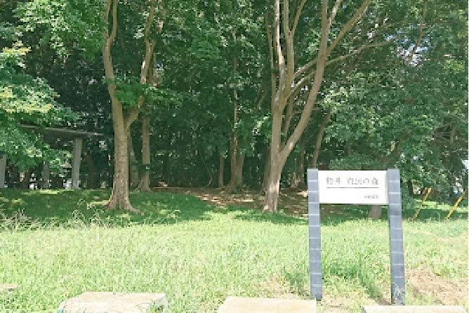 物井市民の森